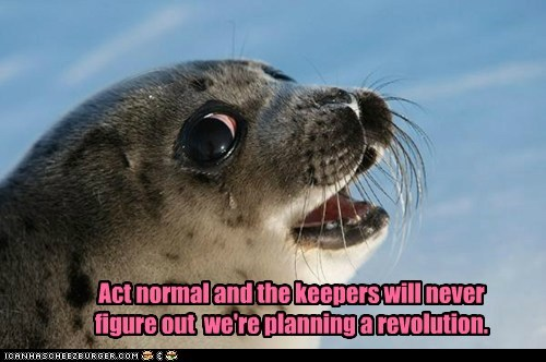 fins,normal,pinnipeds,planning,revolution,seal,zookeeper