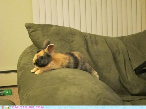 arm,bunny,couch,happy bunday,relax,stretch