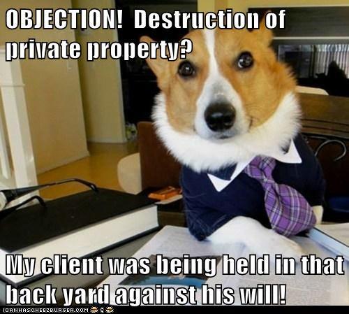 Hall of Fame Lawyer Dog - 6201880064