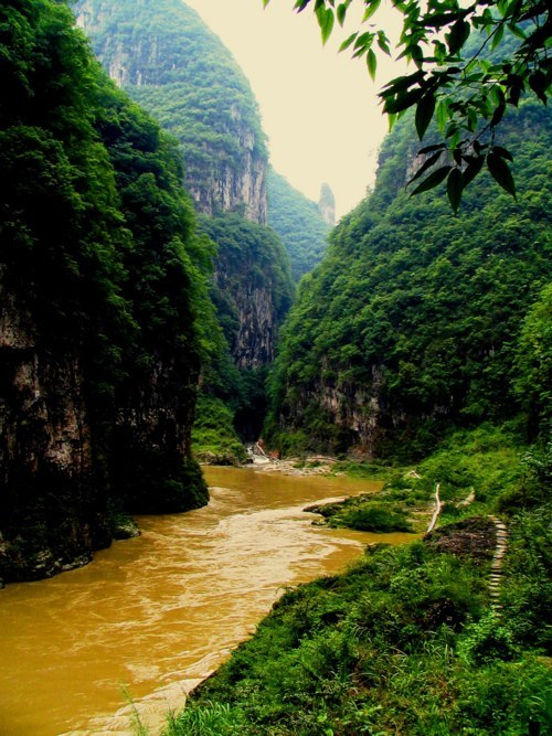 canyon,jungle,river