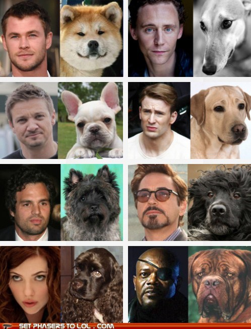 avengers best of the week chris hemsworth cute dogs fandombase It Came From the Interwebz Jeremy renner mark ruffalo robert-downey-jr-chris-e Samuel L Jackson scarlett johansson tom hiddleston totally looks like