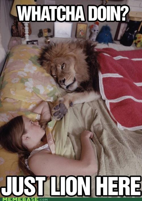 lion,lying,Memes,puns