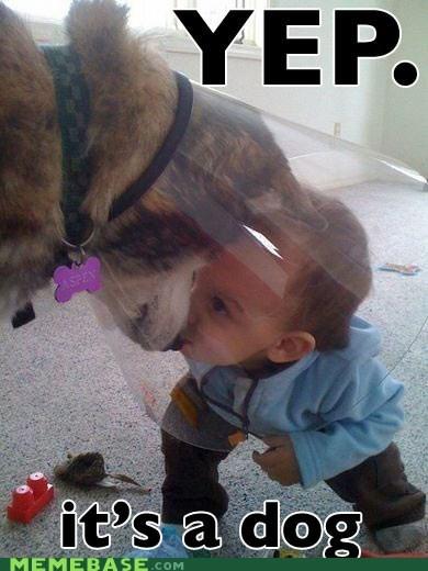 dogs,identifying wood,kids,Memes