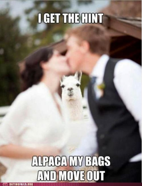 alpaca,dating fails,g rated,pack your bags,so punny