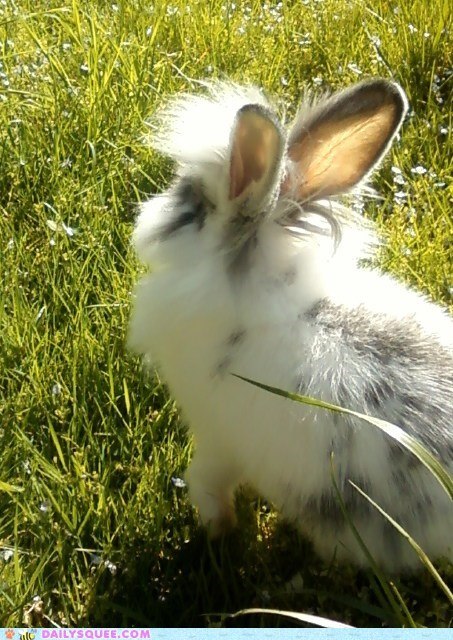 bunny grass happy bunday park pet reader squees - 6203016192