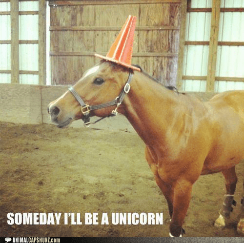best of the week dreams dress up Hall of Fame horse horses pretending Someday traffic cone unicorn unicorns