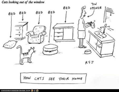 bed cat comic human object objects perspective purpose view vision - 6203241216