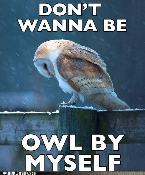 all by myself,alone,best of the week,Hall of Fame,Owl,puns,Sad,song
