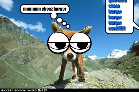 Cheezburger Image 6203968512