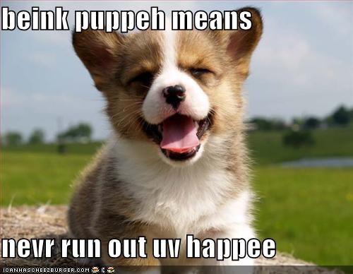 corgi happy puppy - 620411648