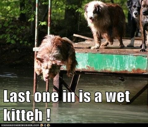 Last one in is a wet kitteh !