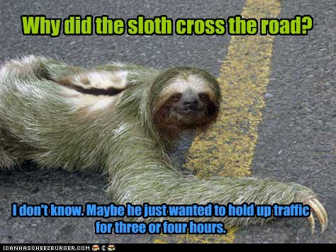 Why did the sloth cross the road? I don't know. Maybe he just wanted to hold up traffic for three or four hours.
