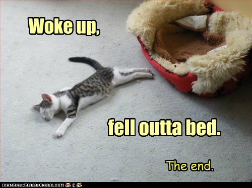 bed,best of the week,Cats,Hall of Fame,lolcats,morning,sleep,The End,tired,wrong side of the bed