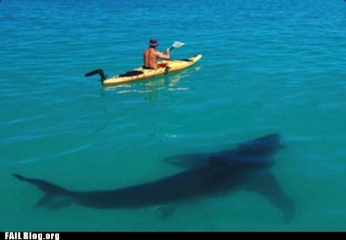 Hall of Fame,kayak,ocean,shark