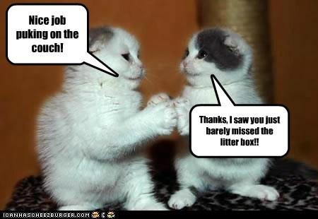 Cats conspiracy destroy destruction gross Hall of Fame jerk litter box lolcats puke teamwork - 6205995008