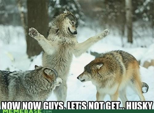 Bad Joke Eel husky joke terrible wolves - 6206074880