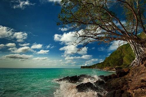 beach guadelope island ocean - 6206174976
