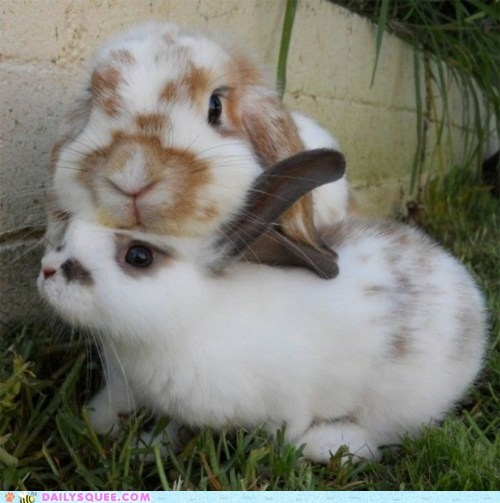bunnies,grass,happy bunday,heads,rabbits,stack