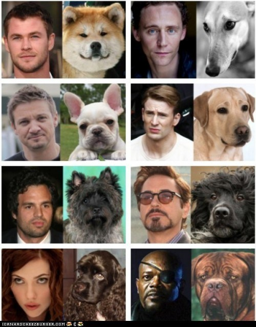 actors dogs look alikes movies The Avengers - 6206643200