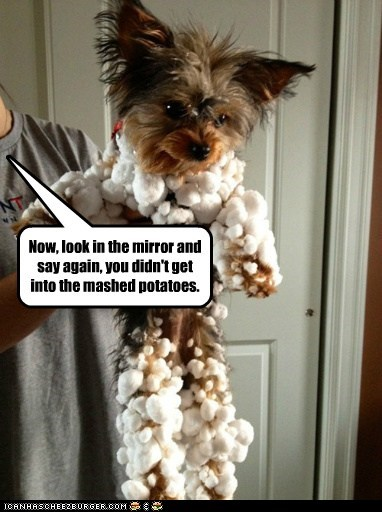 dogs mashed potatoes snow yorkie - 6206754048