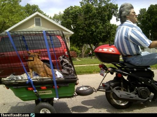 cage,carriage,dogs,kennel,motorcycle,passenger,pet