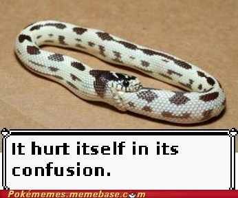 Battle,confusion,hurt itself in its confusion,IRL,Memes,snake