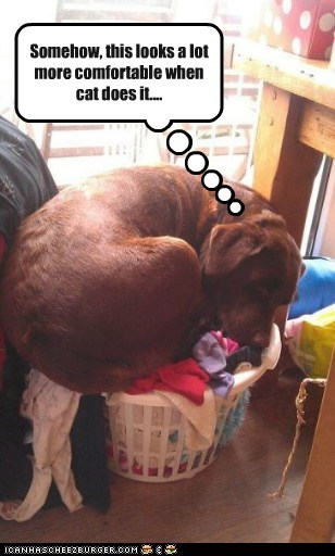 comfy dogs doin it wrong laundry what breed - 6207259392
