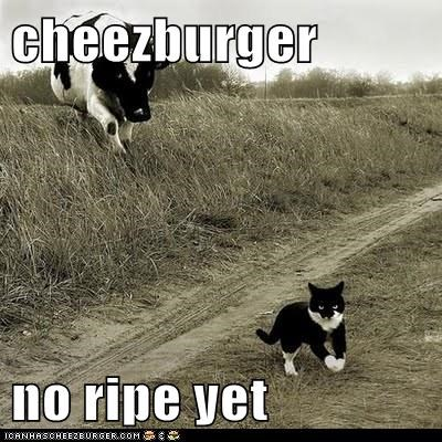 Cheezburger Image 6207471104