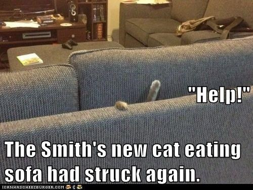 Help The Smith S New Cat Eating Sofa Had Struck Again Lolcats