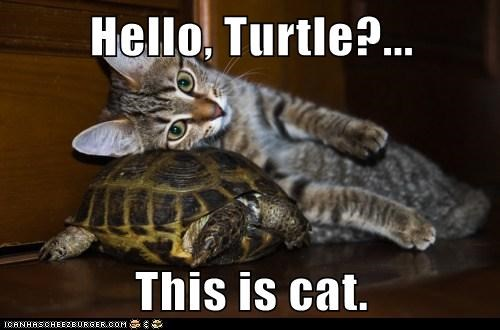 Hello, Turtle?... This is cat.