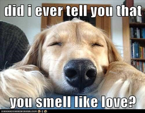 best of the week,dogs,golden retreiver,good smell,Hall of Fame,love