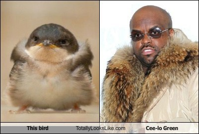 bird,cee-lo green,celeb,funny,Hall of Fame,rapper,TLL