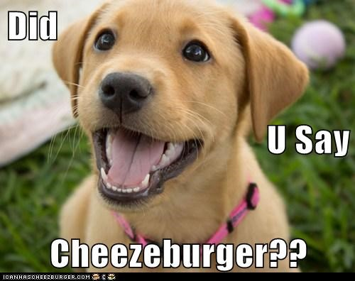 Cheezburger Image 6208114688