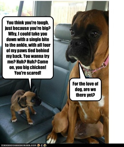 annoyed,annoying,are we there yet,best of the week,boxer,car,dogs,fighting,Hall of Fame,puppies,puppy,trash talking