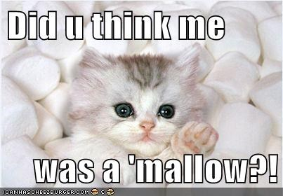 blend in camouflage Cats lolcats marshmallow marshmallows mistake mistakes oops - 6208563968
