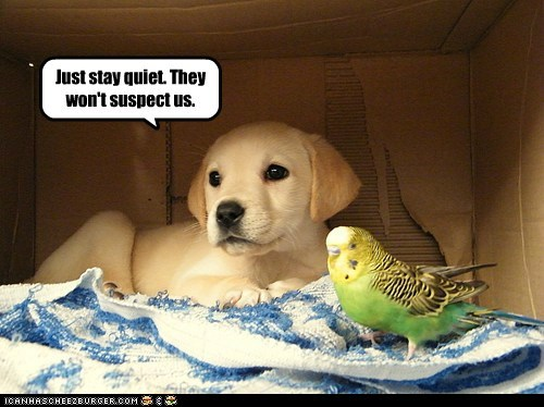 be cool,dogs,golden lab,parakeet