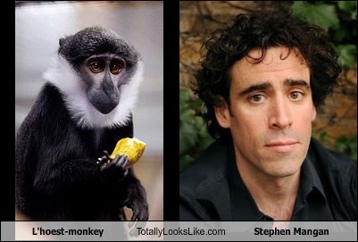 L''hoest-monkey Totally Looks Like Stephen Mangan