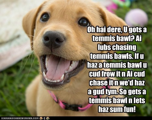 cute dogs fetch puppy tennis ball - 6208848384