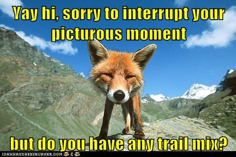 fox,help,hungry,interrupt,moment,nosey,picture,ruin,trail mix