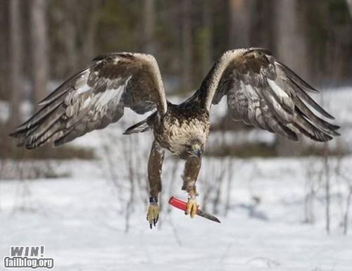 animal BAMF bird g rated hawk knife win - 6209206272