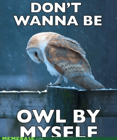 all by myself lyrics Memes Owl - 6209346560