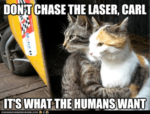 Cats dont-do-it lasers Memes red dot restraining restraining cat - 6209485312