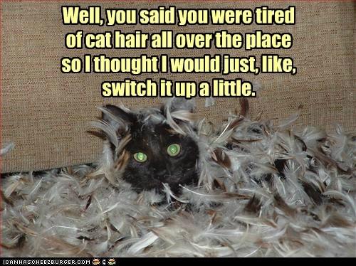 cat hair clean feather hair mess - 6209520384