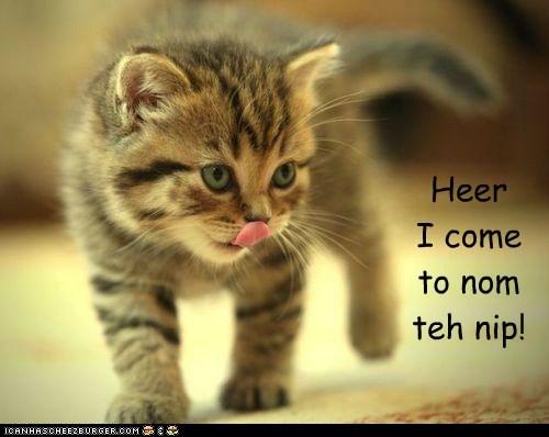 Heer I come to nom teh nip!