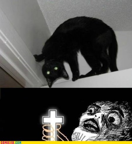 bad luck black cat creepy evil the internets