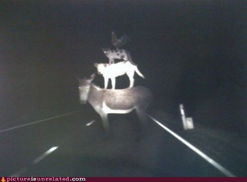animals,best of week,driving,drunk driving,road,wtf