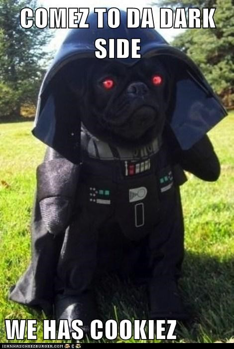 best of the week,cookies,dark side,darth vader,dogs,Hall of Fame,pug,star wars