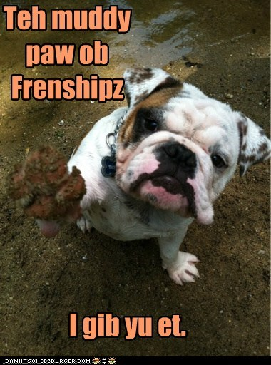 bulldog,dogs,friendship,love,muddy