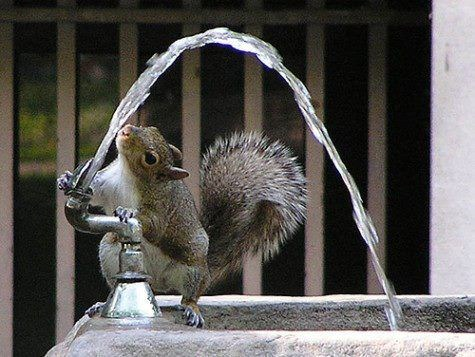 Pics of animals drinking water that are clearly very thirsty to be trying so hard to quench their thirst