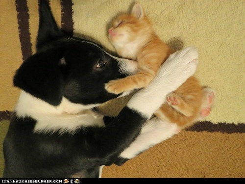 Cats dogs goggies r owr friends Interspecies Love kitten puppies - 6210556416
